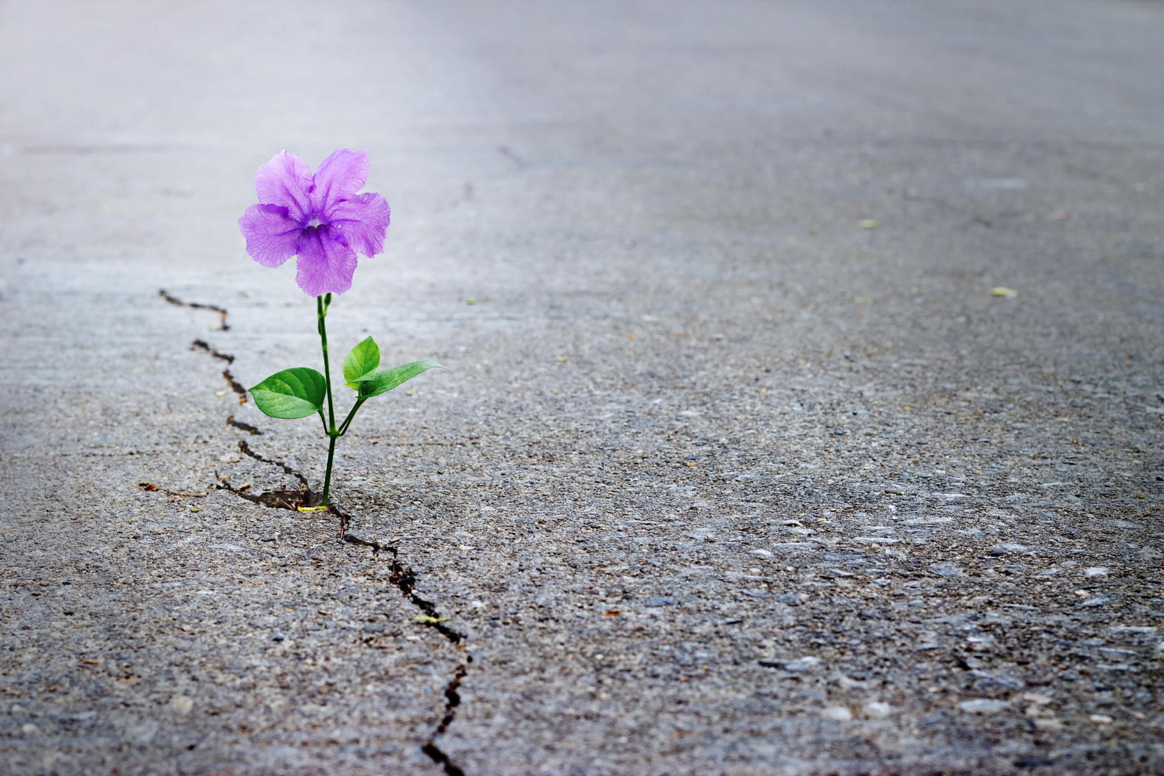 Finding Hope In The Seemingly Hopeless Chiari Fight!